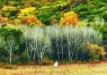 在乌兰布统的秋天治愈疲惫 在锡林郭勒的草原牧歌田园