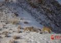 瓜州:红外相机捕捉到多种珍惜野生动物影像