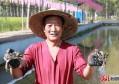 河北涿州稻蟹共生双丰收