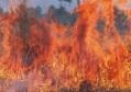 突发!北京密云森林大火,风势较大导致蔓延快,扑救面临极大挑战
