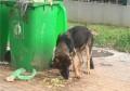 警犬被盗事件通报 究竟是救助还是盗窃?