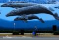盘点地球最大的五种鲸鱼!虎鲸未上榜,抹香鲸排第四