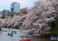 日本海豚湾血流成河,这部奥斯卡纪录片《海豚湾》揭秘背后的秘密