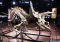 世界最大的三角龙化石骨架在法国巴黎以665万欧元拍出播报文章