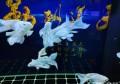 饲养观赏鱼必须使用水质稳定剂吗,如何保证水质稳定、不死鱼?