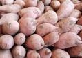 家庭保存红薯的方法简单持久,用纸箱和纸都能做,人人一学都会