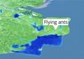 英国上空现巨型飞蚁群 太空可直接观测到!专家指出原因